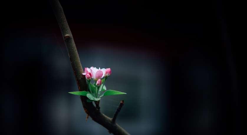 single flowering bud growing on a tree limb