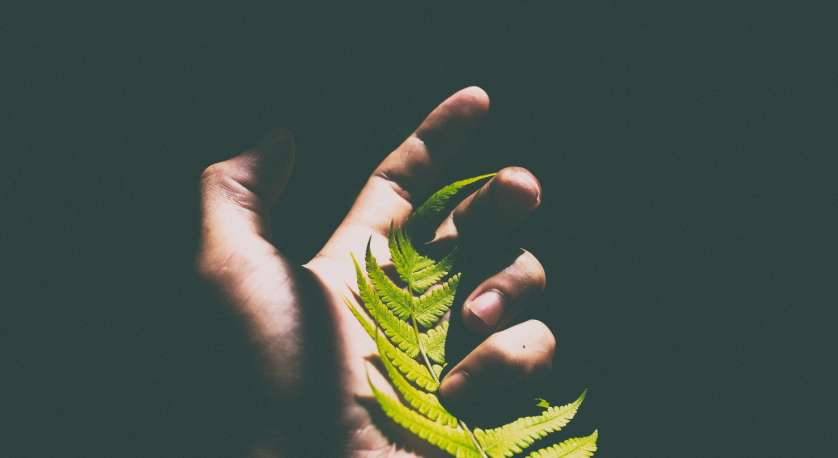 hand holding a bright green fern