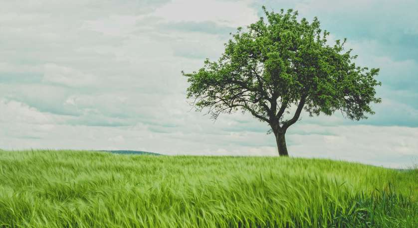tree during summer with bright green grass and a cloudy sky