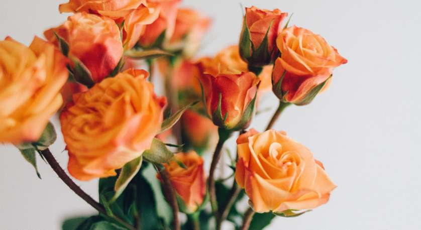 orange flowers in a vase against a white background