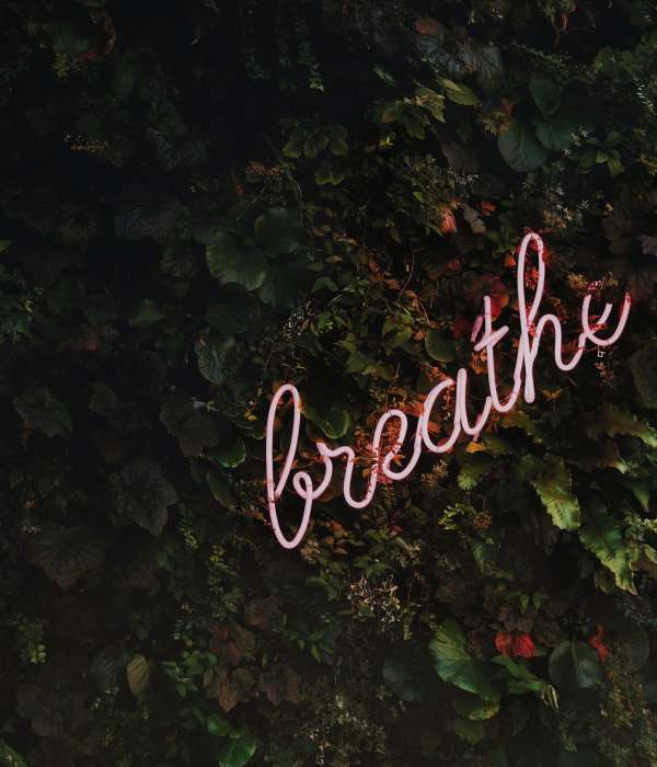 """pink neon sign that says """"breathe"""" against some green foliage that looks like ivy"""