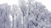 snowy trees outside Cedar Lane UU Church in winter