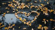 a heart shaped out of fallen autumn yellow leaves on a wet concrete ground